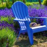 Lavendel gegen